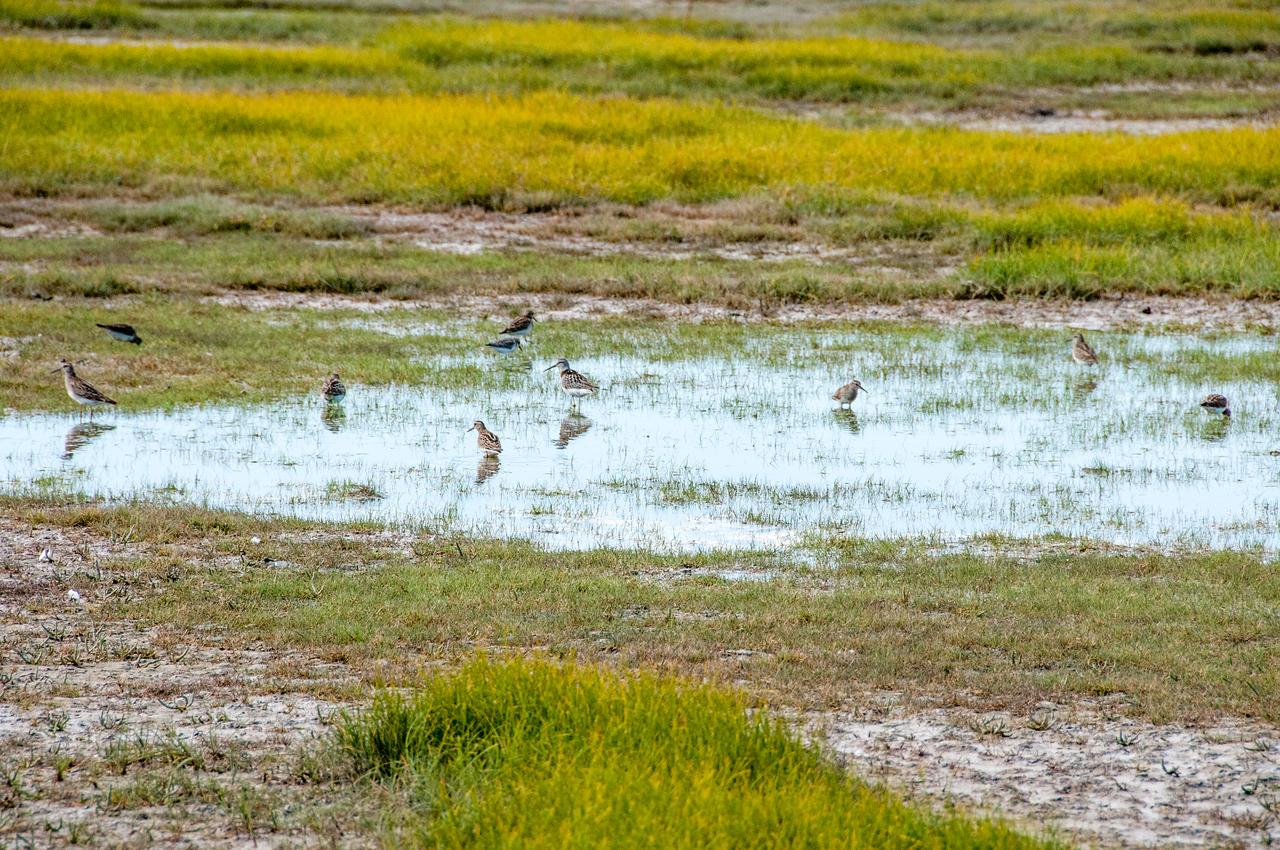 Birds on a swamp near Hudson Bay in Manitoba, Canada