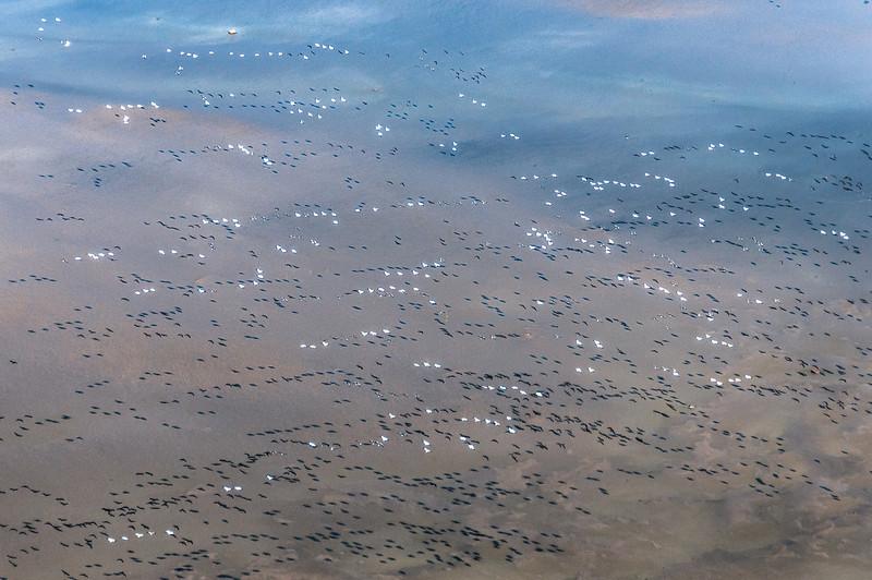 Flying birds over Hudson Bay in Manitoba, Canada