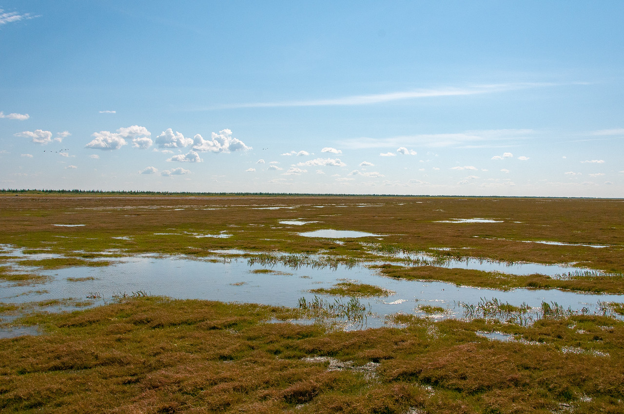 Swamps near Hudson Bay in Manitoba, Canada