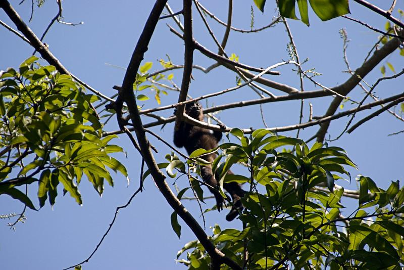 <center>Spider Monkeys   <br><br>Villa Hermosa, Mexico    </center>