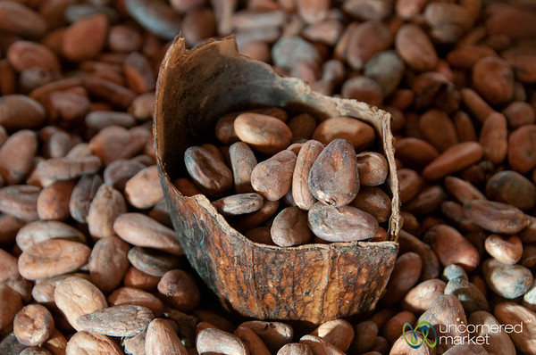 Cocoa Beans at Chocolate Mayordomo - Oaxaca, Mexico