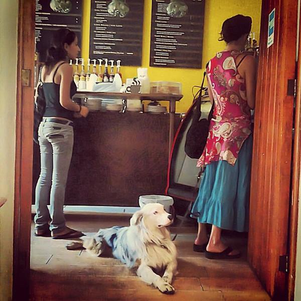 Dog waiting for morning coffee #Oaxaca