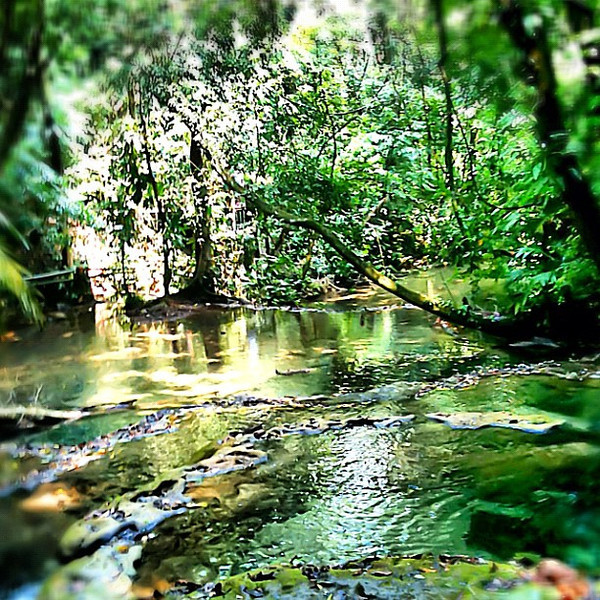 Palenque jungle oasis, I want to jump in #Chiapas #Mexico