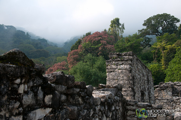 Palenque View from the Palace - Chiapas, Mexico