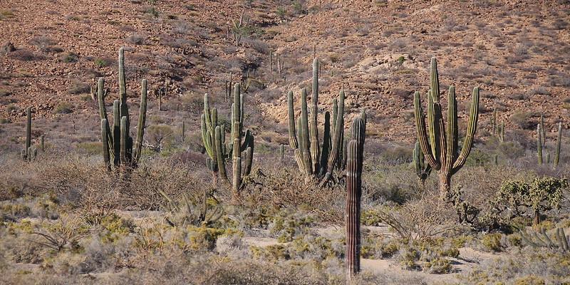 Travel to Baja California (Podcast)