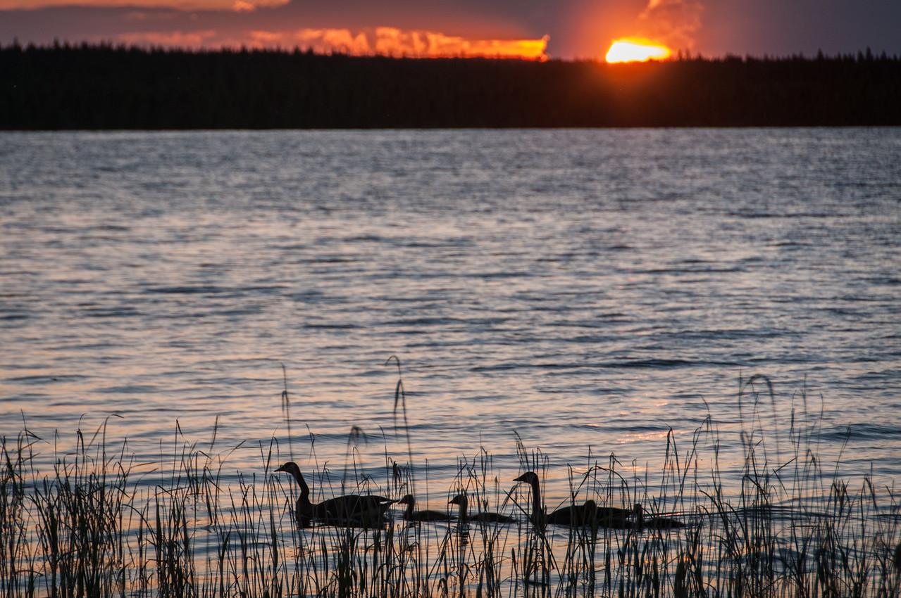 Ducks on lake during sunset at Voyageurs National Park