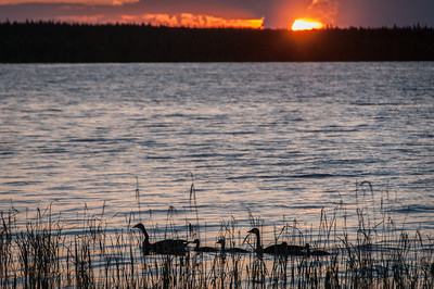 Ducks on lake during sunset at Voyageurs National Park