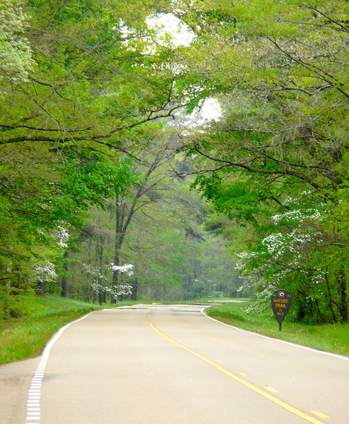 Scene on the Natchez Trace in Mississippi
