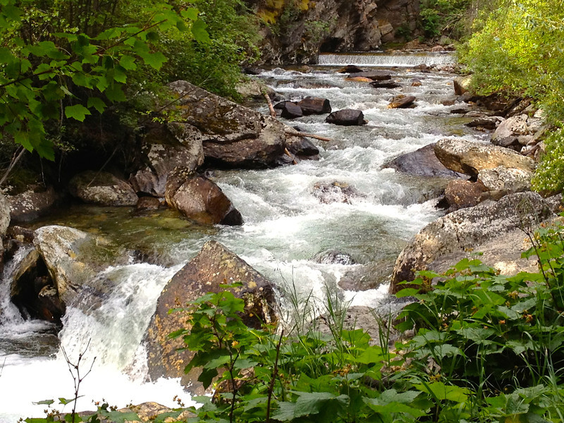 A creek with white water and boulders flows between a green landscape on an uncrowded Montana summer road trip.