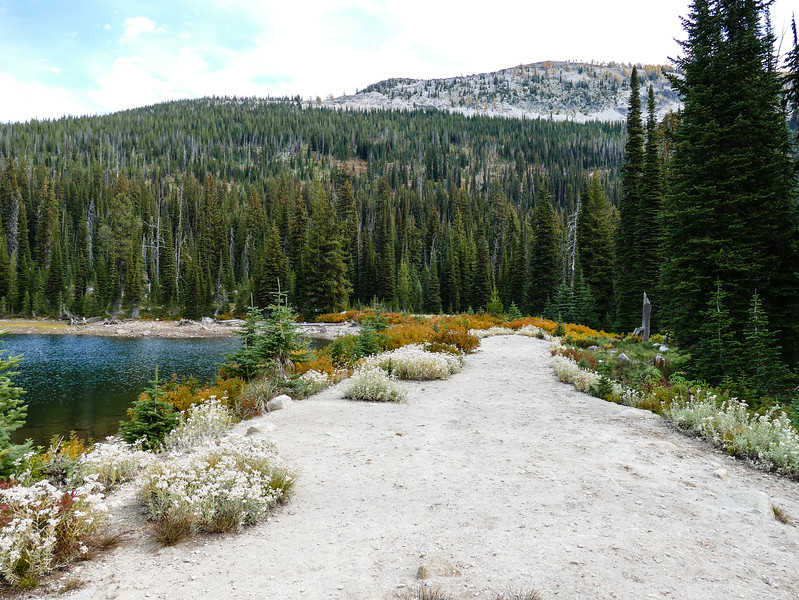 A trail bordered by fall wildflowers next to a lake.