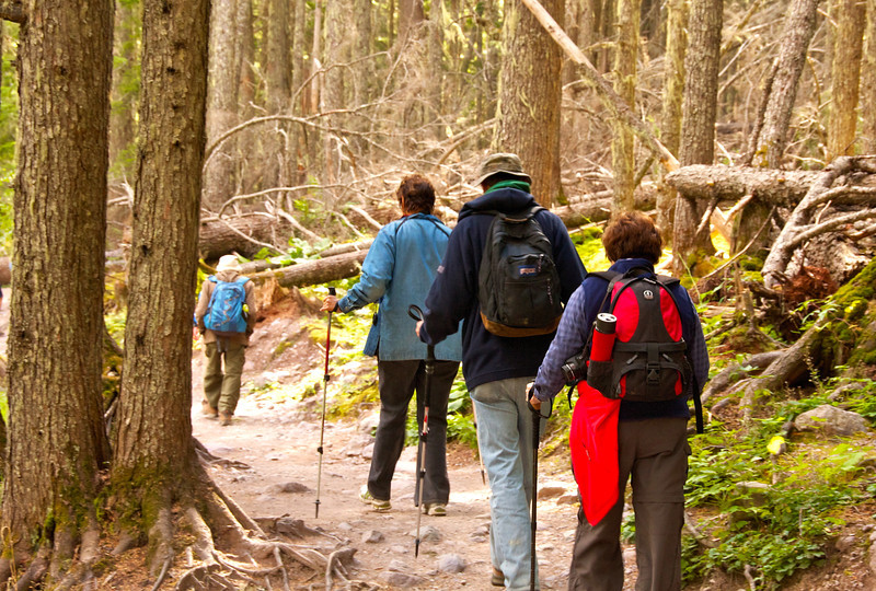 A group walks along the Avalanche Lake trail surrounded by old growth cedar trees.