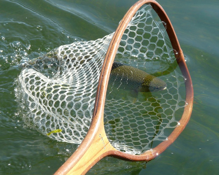Netting the fish