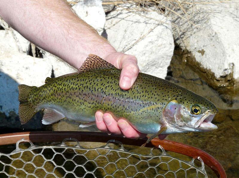 Alan's second trout