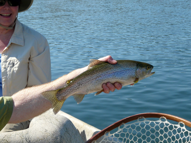 Alan's first trout