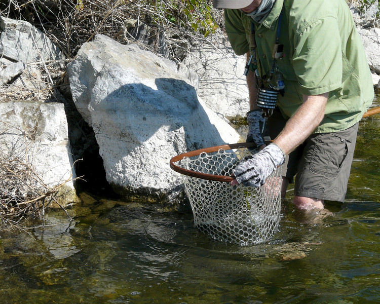 Chris nets the trout
