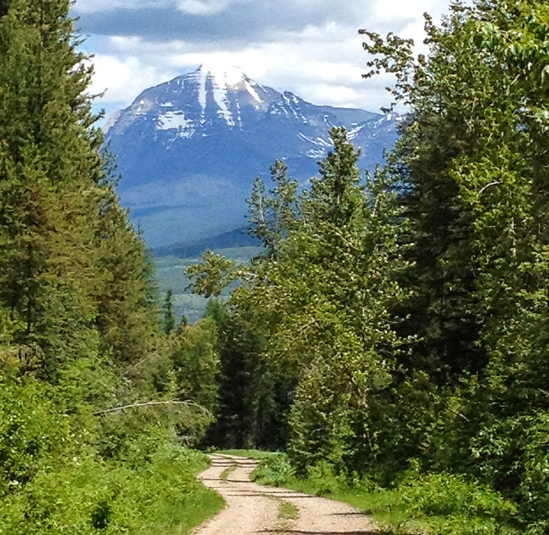 Dirt forest road surrounded by green trees with snow-capped mountain view.