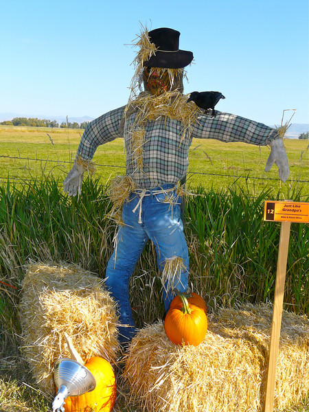 scarecrow, straw bales with a field and blue sky in the distance.