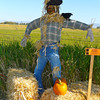 2010 Scarecrow Festival #8