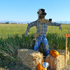 2010 Scarecrow Festival #1