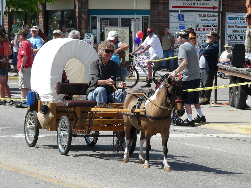 Miniature horse and buggy in the Western Heritage Days parade