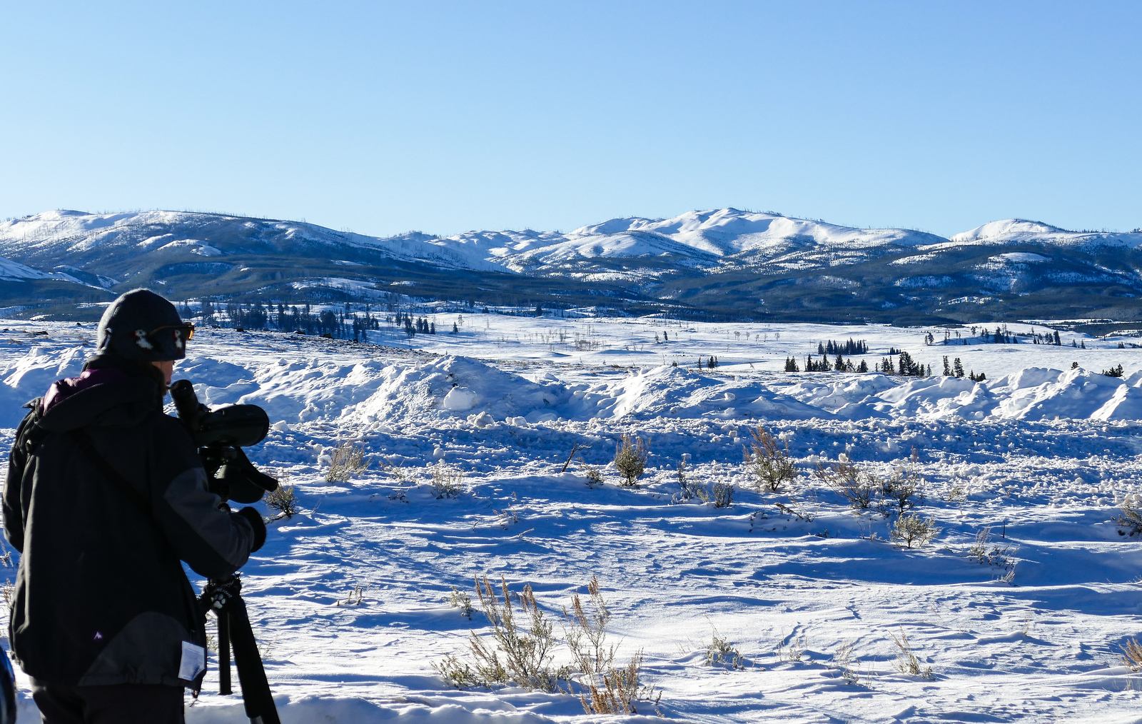 Wildlife watching on a winter trip to Yellowstone National Park.