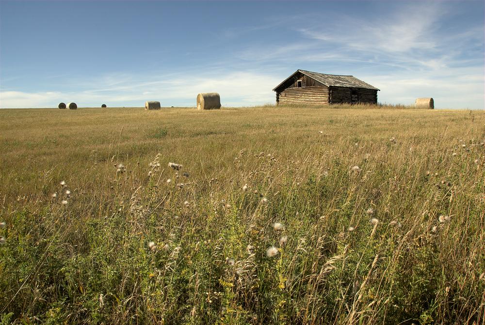 Meadow outside Glacier National Park, Montana