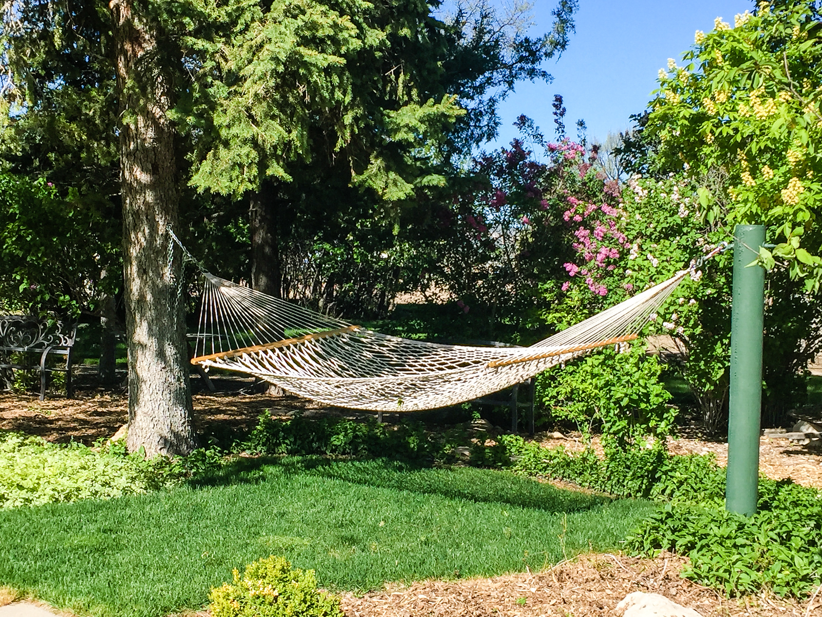 Hammock hanging from a tree in the garden at Barn Anew Bed and Breakfast.