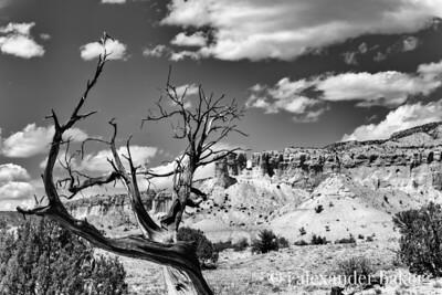 Dead Juniper - Ghost Ranch