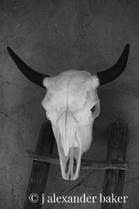 Cow Skull, Taos Pueblo
