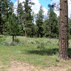 New Mexico picnic spot