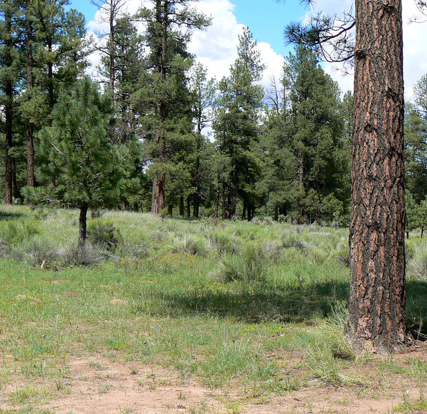 Stop for a picnic in the pines on a New Mexico Backroads Weekend Adventure.