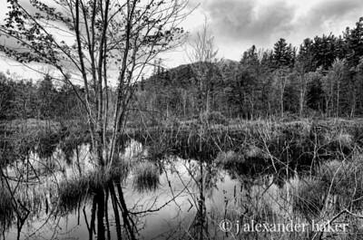 Beaver Pond, Wilmington NY