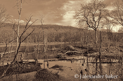 Beaver Lodge, Long Valley Pond, Sterling Forest, NY