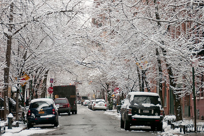 Snow covered trees and parked vehicles in New York City