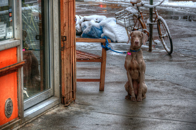 A dog tied up outside - Greenwich Village, New York City