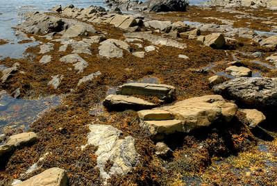 Rocky shores of Gros Morne National Park, Canada