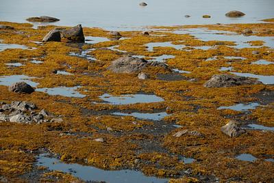 Shores of L'Anse Aux Meadows, Newfoundland, Canada