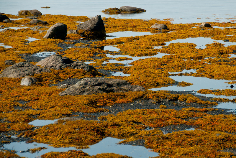 Shores of L'Anse Aux Meadows, Newfoundland, Canada