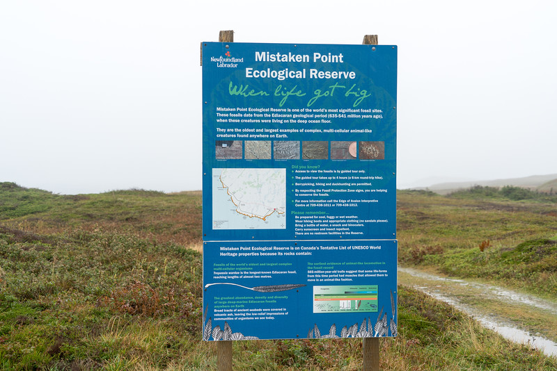 Mistaken Point Sign