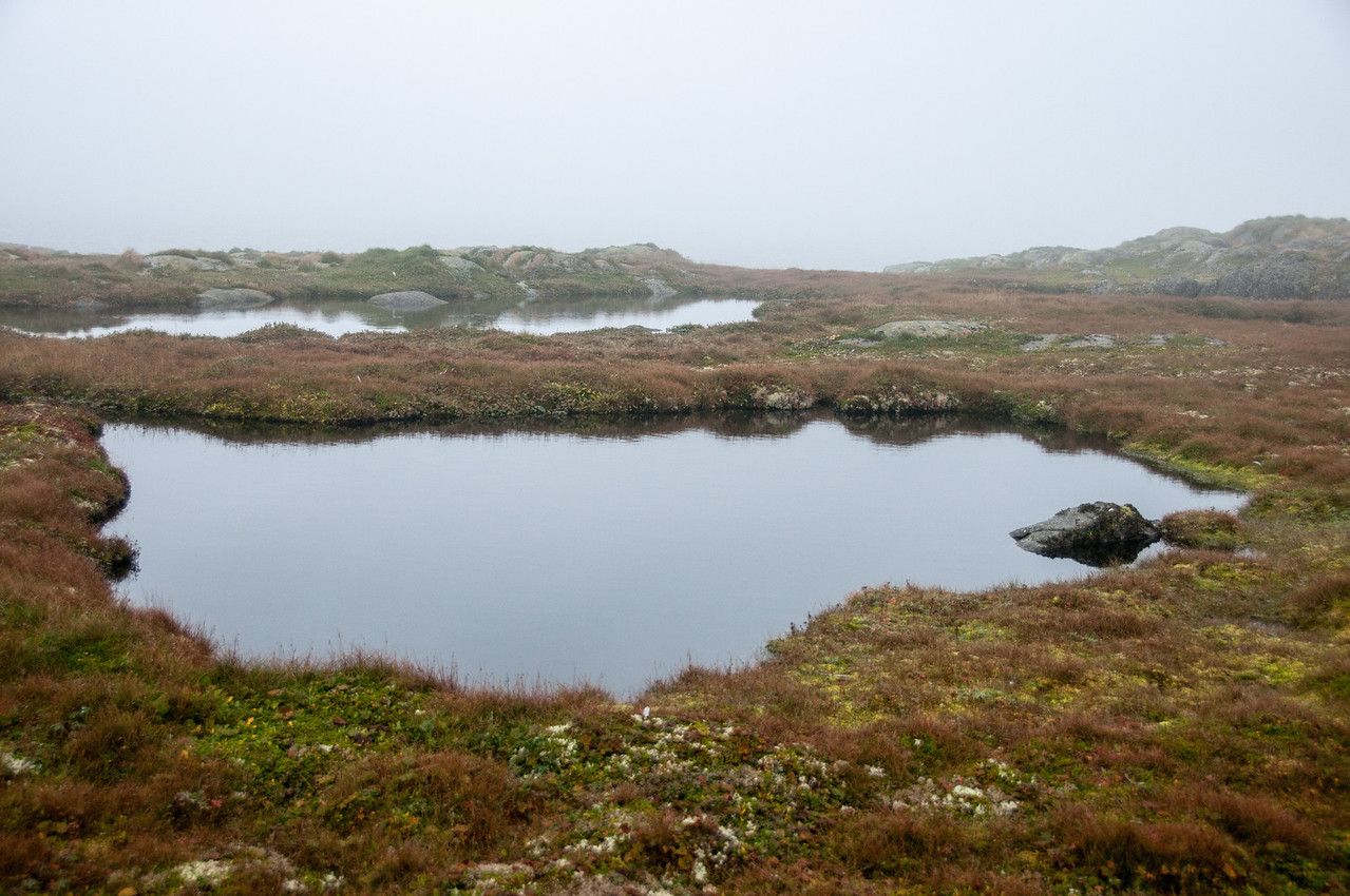 Swamps in Red Bay, Newfoundland and Labrador, Canada