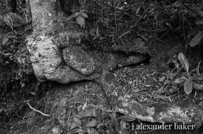 Tree Fist - Linville Falls, NC