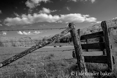 Blue Ridge Pasture (Black & White)