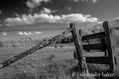 Blue Ridge Pasture (Black & White)