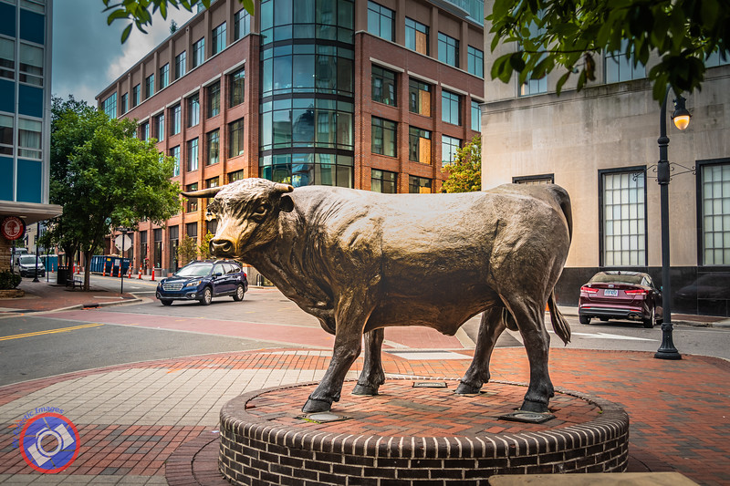 The Durham Bull (©simon@myeclecticimages.com)