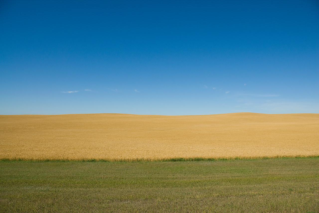 Grassland in Theodore Roosevelt National Park