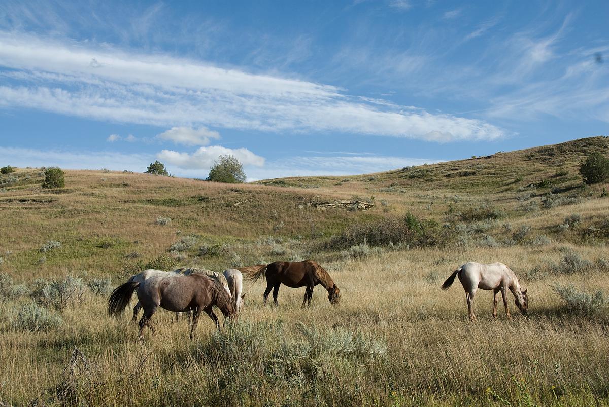 North American National Park #3 - Theodore Roosevelt National Park, North Dakota