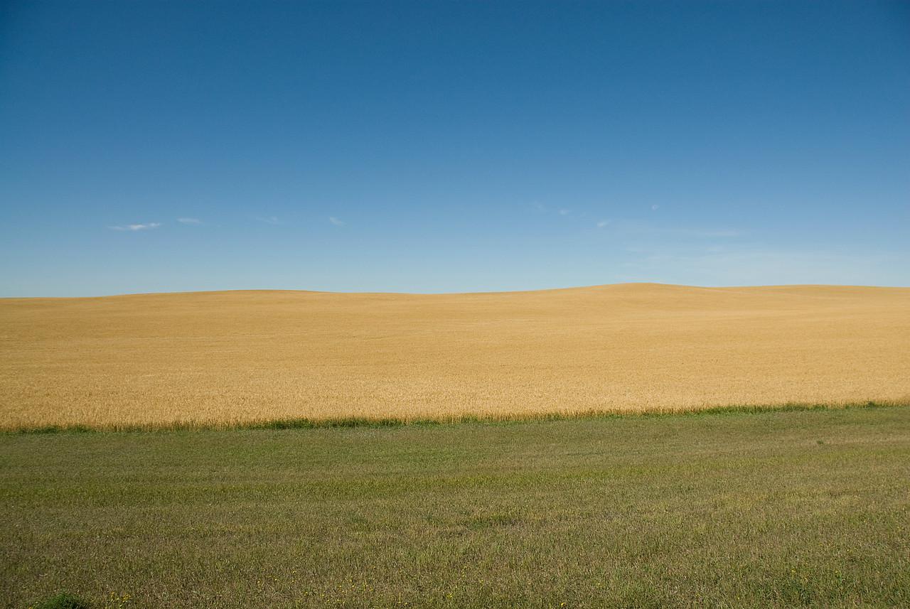 Grassland in Theodore Roosevelt National Park, North Dakota