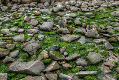 Fossilized rocks near Joggins Fossil Cliffs in Nova Scotia