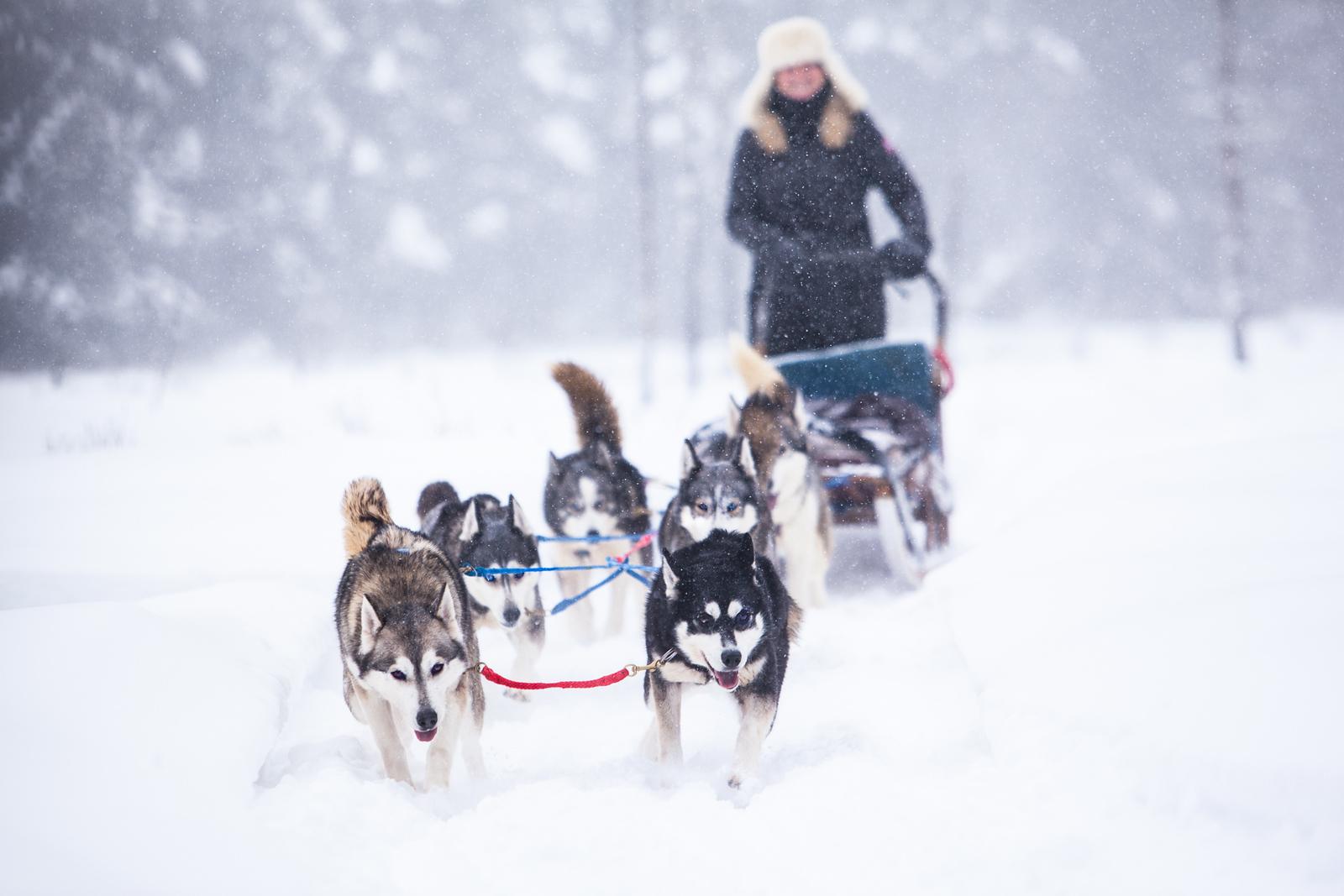 Dogsledding with Winterdance