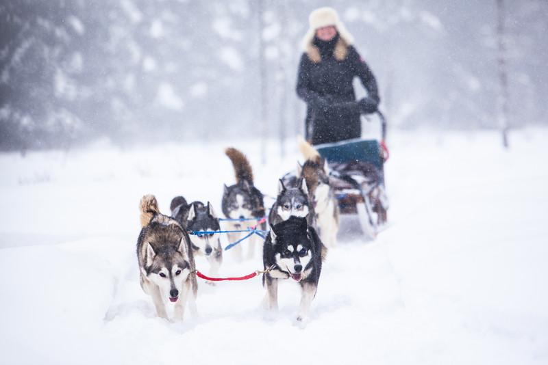 Winterdance-Dogsledding-Huntsville